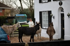 Donkeys queuing for food 3