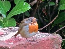 Robin 9.12 (2)