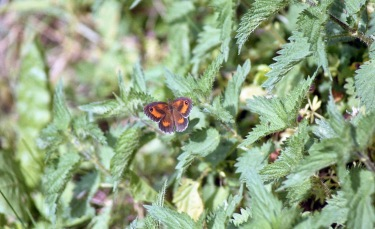 Butterfly 1 7.03