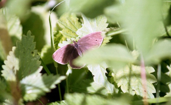 Butterfly 2 7.03