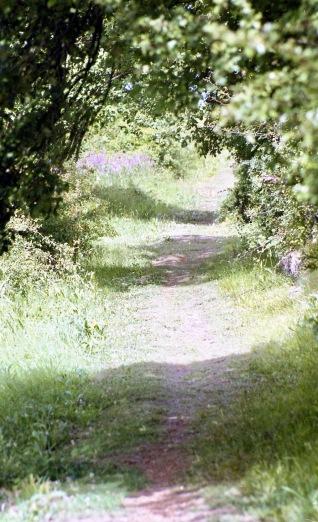 Footpath 7.03