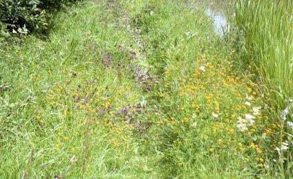 Wild flowers on footpath 7.03