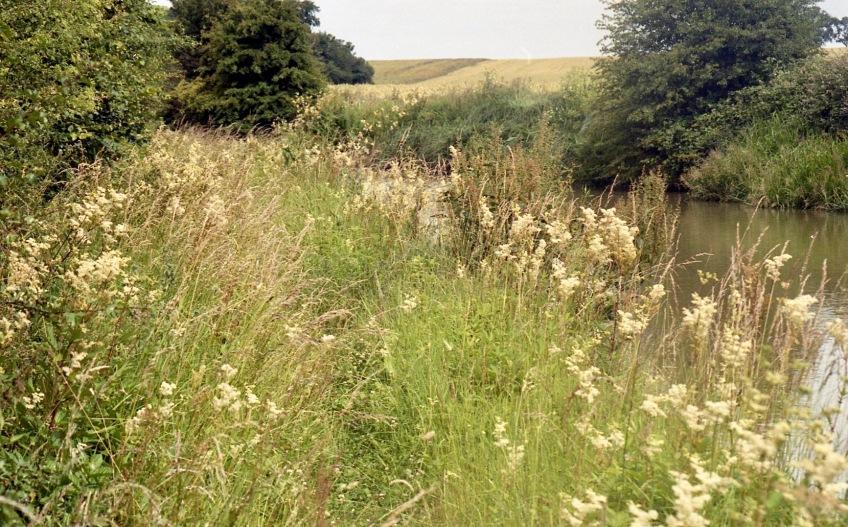 Overgrown footpath 1 7.03