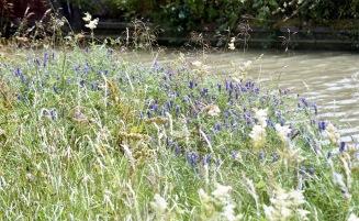 Overgrown footpath 2 7.03