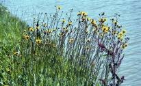 Yellow flowers 1 7.03