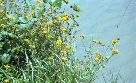Yellow flowers 2 7.03