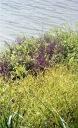 Overgrown path 3 7.03