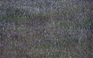 Grass 7.03