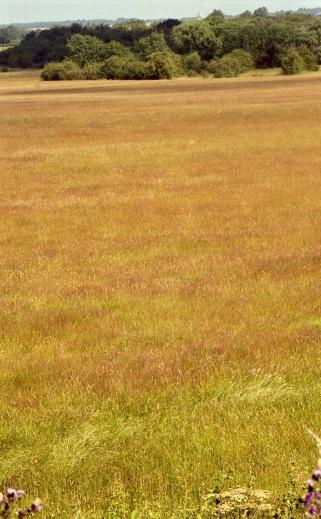 Grass in landscape 7.03