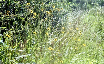 Wild flowers and grasses 7.03