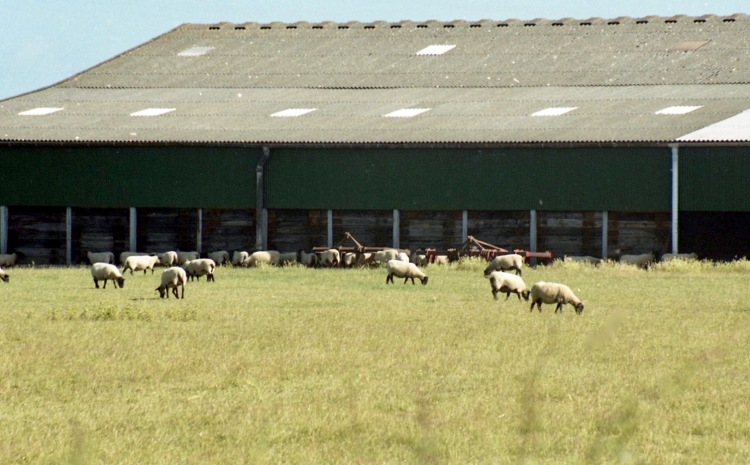 Sheep and farm buildings 7.03