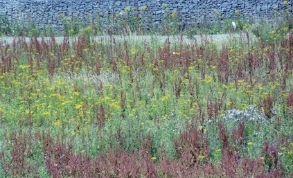 Wildflowers against wall 7.03