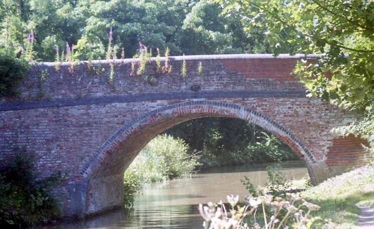 Willowherb on Bridge over River Soar 7.03