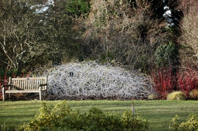 White bramble and bench