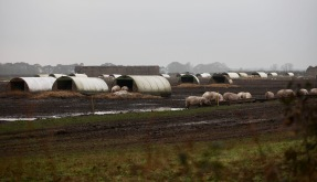 Pig Farm 1