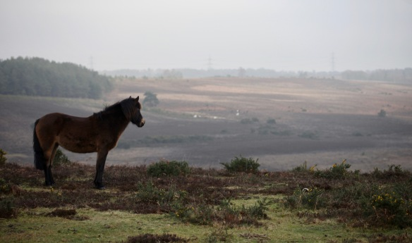 Pony on Deadman Hill
