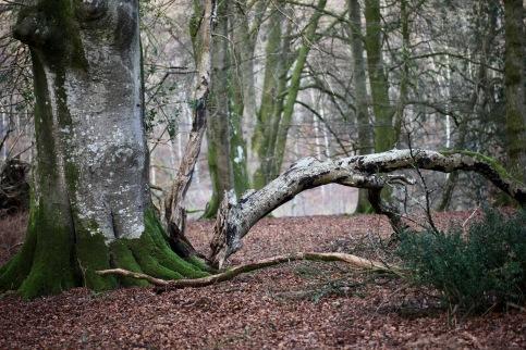 Fallen trees 8