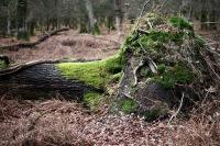 Fallen trees 9