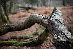 Fallen trees 10