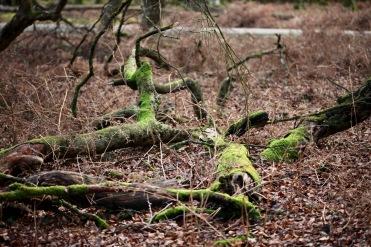 Fallen trees 11