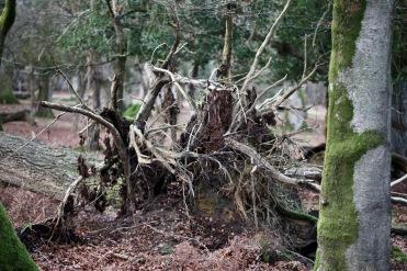 Fallen trees 12