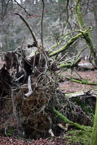 Fallen trees 13