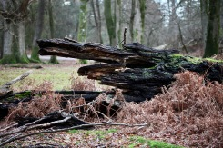Fallen trees 14