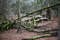 Fallen trees 15