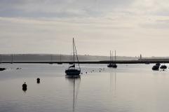 Gulls, buoys, yachts