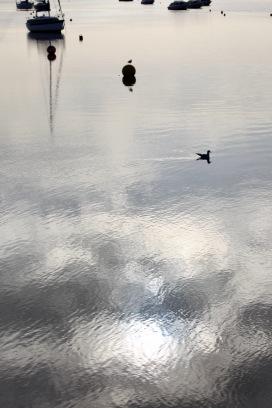 Gulls, buoys