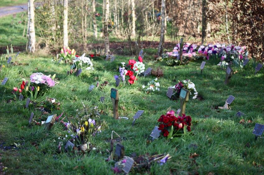 Woodland Burial Ground 8