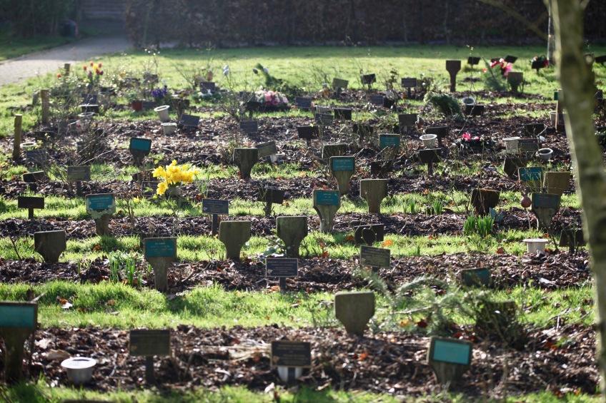 Woodland Burial Ground 11