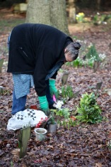 Jackie planting primula