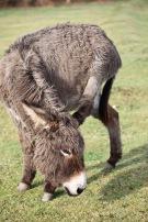 Donkey 7