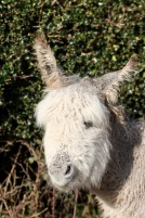 Donkey 9