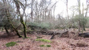 Fallen trees 1