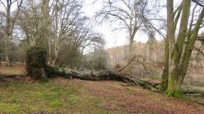Fallen trees 2