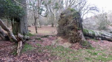 Fallen trees 3