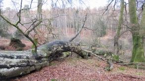 Fallen trees 4