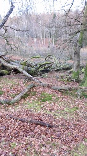 Fallen trees 5