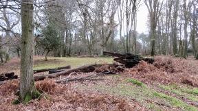 Fallen trees 6
