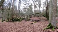 Fallen trees 7