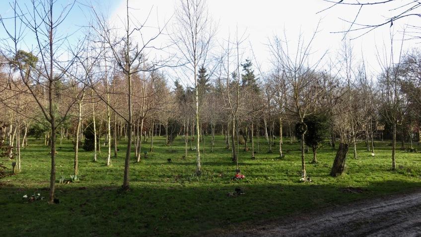 Woodland Burial Ground 1