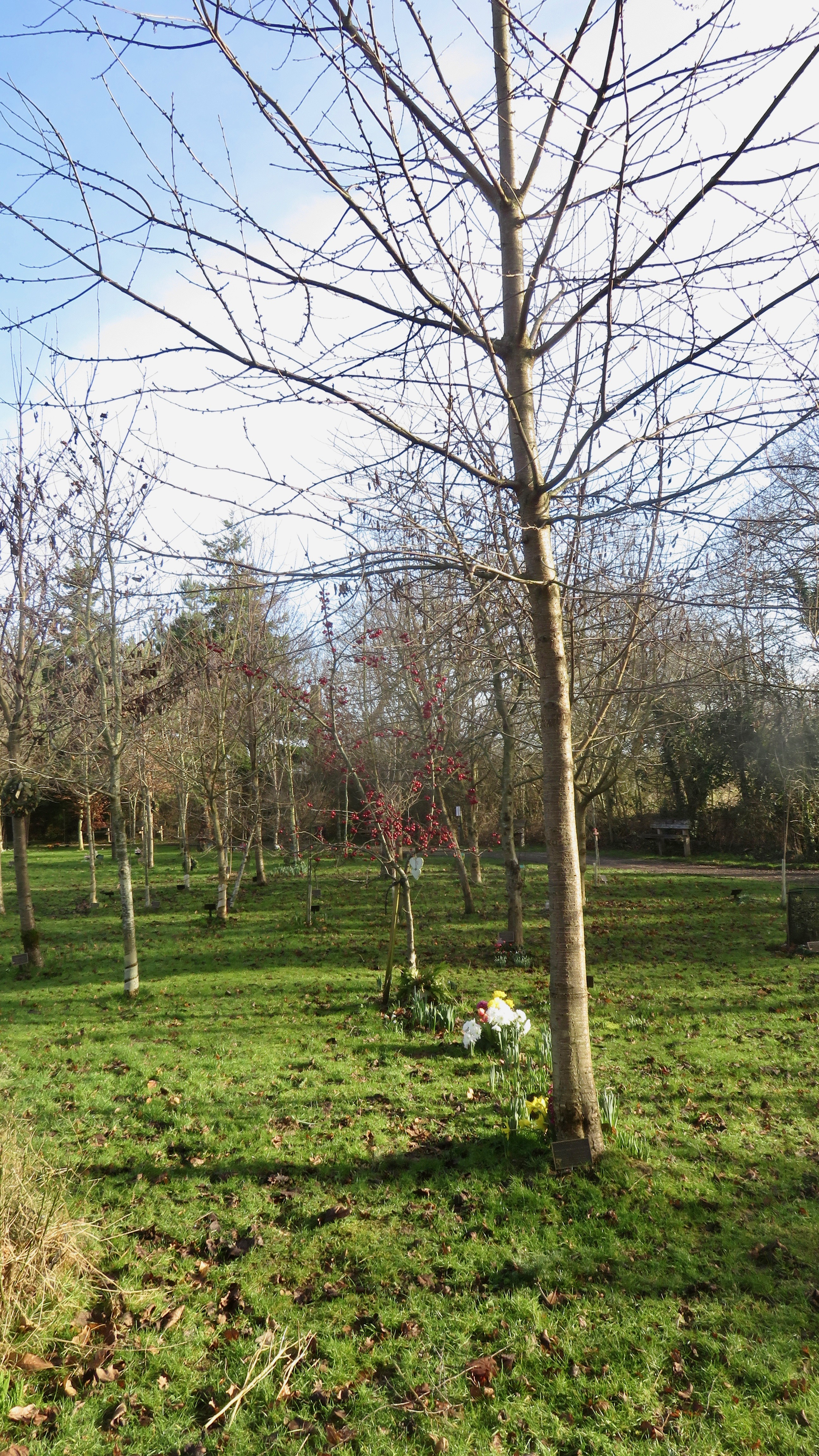 Woodland Burial Ground 2