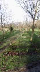 Woodland Burial Ground 4