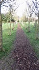 Woodland Burial Gound 7
