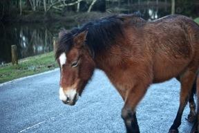 Pony 8
