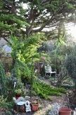 Broken cypress 4