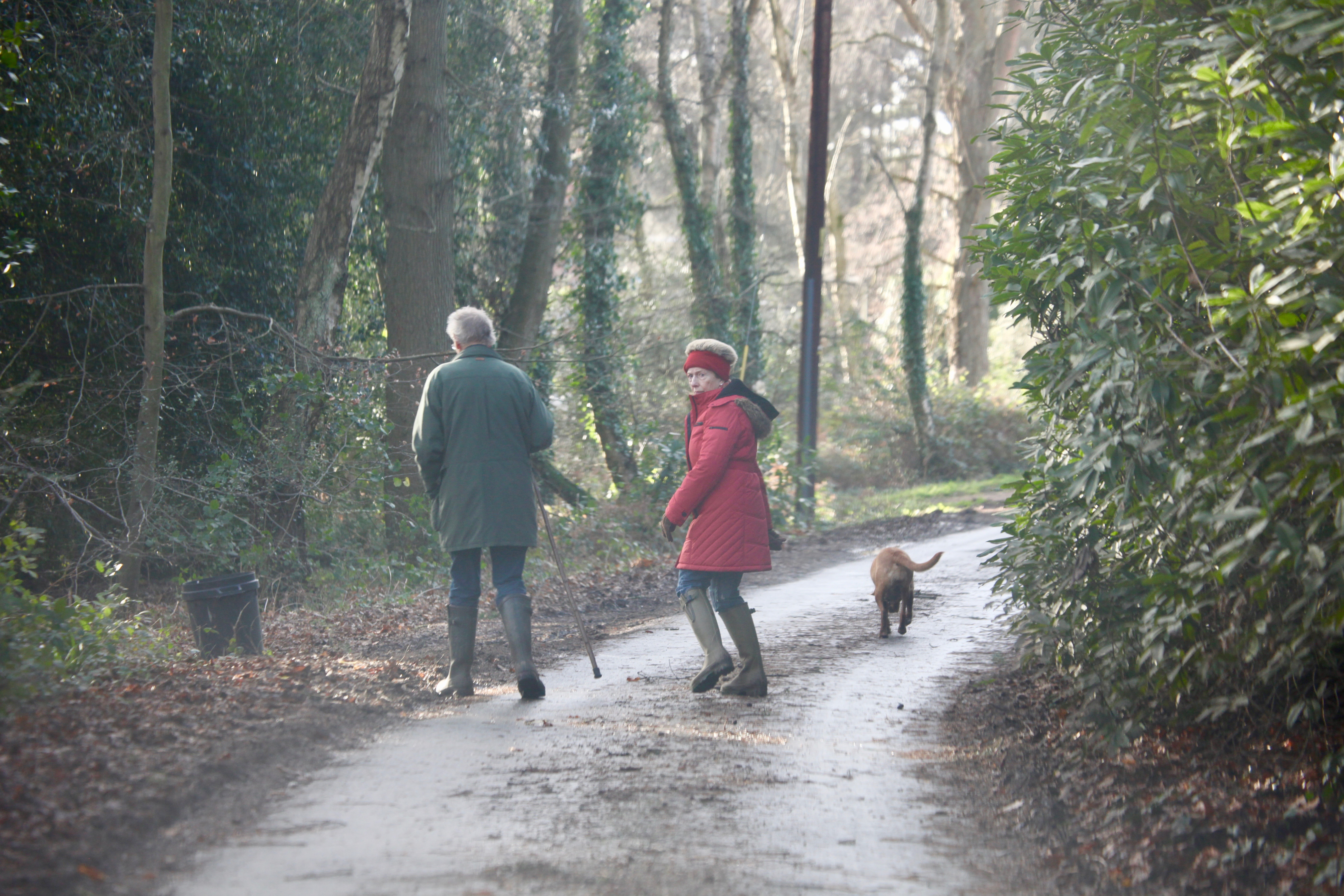 Dog walkers on lane