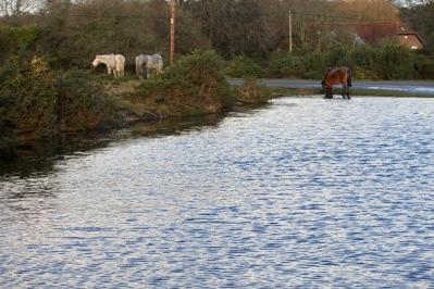 Ponies at Pool